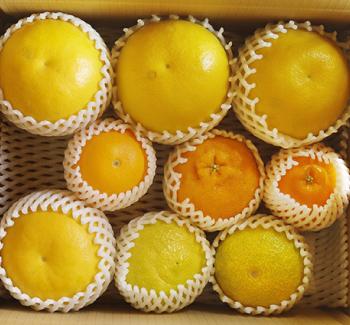 季節のフルーツセット